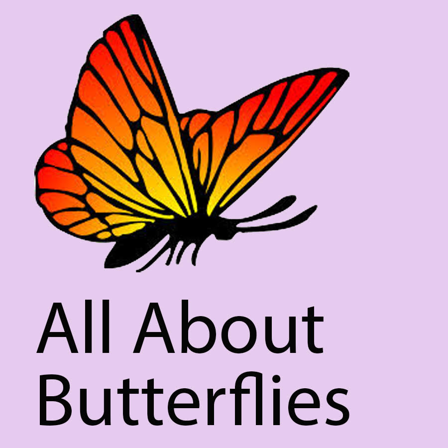 orange butterfly with text: All About Butterflies